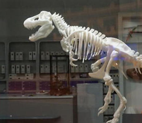 Giant T-Rex Skeleton Model